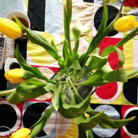 Yellow bright tulips