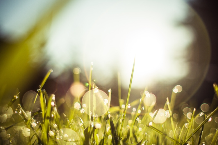 morning-dew-grass-picjumbo-com
