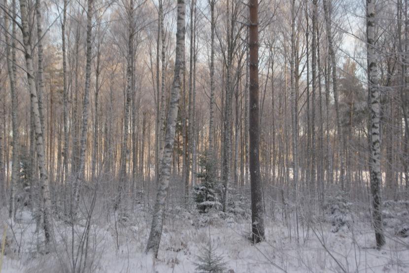 Vita, vackra vintervärld