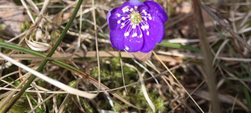 Vårvintervecka på Åland